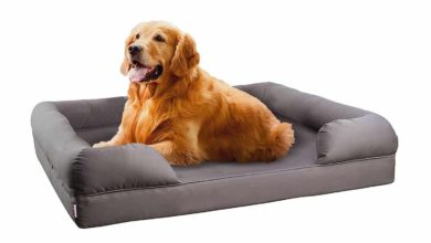 Photo of Top 10 Best Dog Sofas and Chairs in 2021