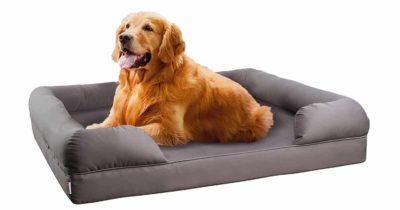 Top 10 Best Dog Sofas and Chairs in 2018