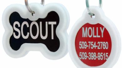 Photo of Top 10 Best Pet ID Tags in 2021