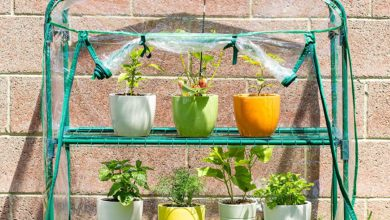 Photo of Best Greenhouse Kits to Grow Vegetables in 2021